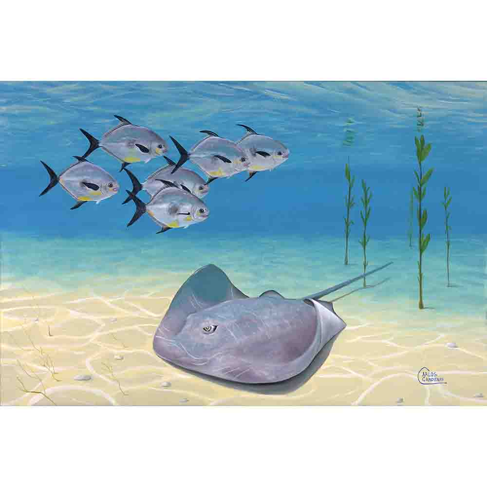 Stingray and Permits