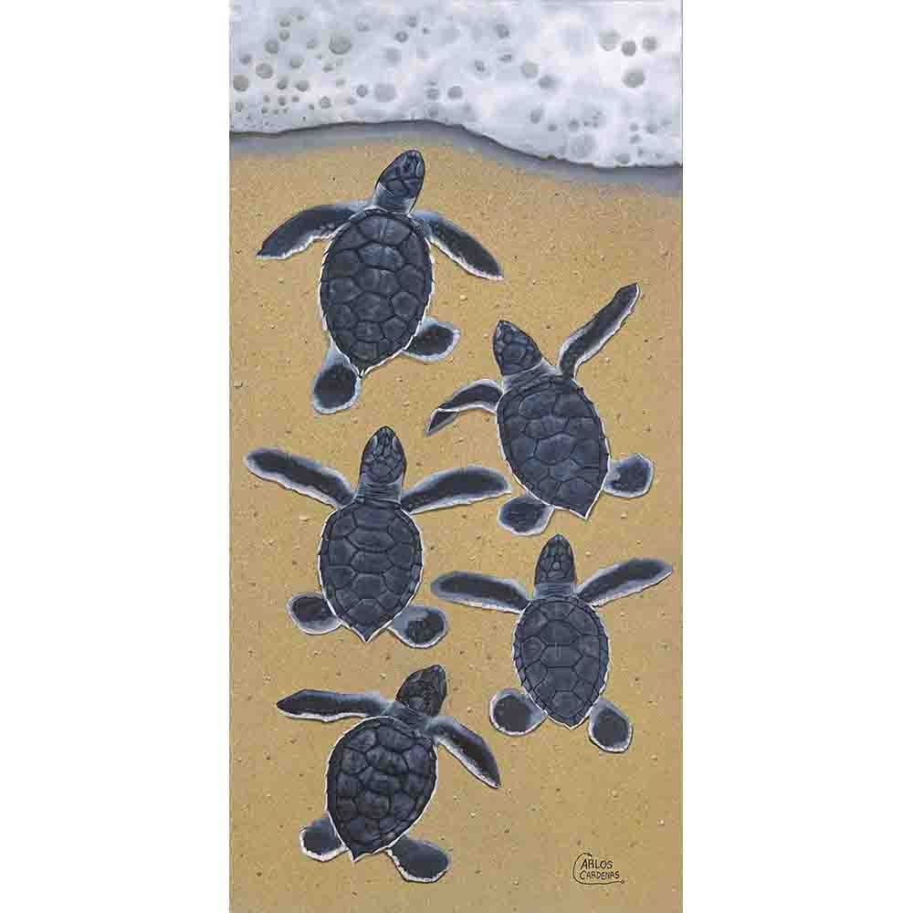 The Hatchlings-Turtles